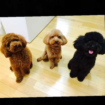 14.02.12 guess who s puppy in the middle of C&G !! they'll give you warm hug so don't cry don't be angry believe me and believe us